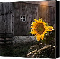 Old Photo Canvas Prints - In the Light Canvas Print by Bill  Wakeley