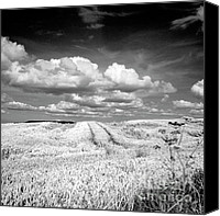 Rural Scenes Photo Canvas Prints - Infrared landscape in Norway Canvas Print by Heiko Koehrer-Wagner