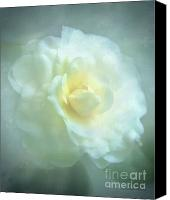 Camelia Canvas Prints - Into The Mist Canvas Print by Zeana Romanovna