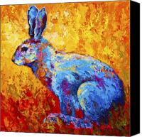 Hare Canvas Prints - Jackrabbit Canvas Print by Marion Rose
