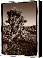 Joshua Canvas Prints - Joshua Tree Forest Utah Canvas Print by Steve Gadomski