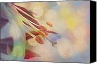 Flower Photograph Canvas Prints - Joyfulness Canvas Print by Aimelle