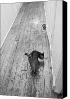Hall Way Canvas Prints - Kitty Canvas Print by Nina Mirhabibi