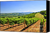 Vines Canvas Prints - Landscape with vineyard Canvas Print by Elena Elisseeva