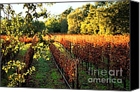 Northern California Photo Canvas Prints - Late Autumn in Napa Valley Canvas Print by Ellen Cotton