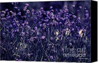 Violet Prints Photo Canvas Prints - Lavender Garden II Canvas Print by Jayne Logan Intveld