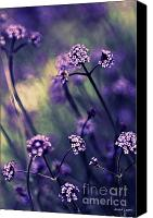 Violet Prints Canvas Prints - Lavender Garden III Canvas Print by Jayne Logan