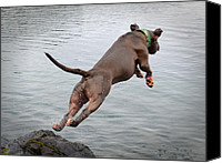 Diving Dog Canvas Prints - Learning to Fly Canvas Print by Deanna Maxwell