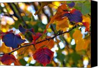 Autumn Leaves Canvas Prints - Leaves of Autumn Canvas Print by Stephen Anderson