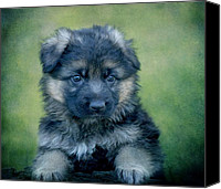 Alsatian Canvas Prints - Long Coated Puppy Canvas Print by Sandy Keeton