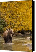 Mammals Canvas Prints - Looking for an Autumn Meal Canvas Print by Tim Grams