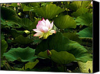 Lotus Pond Canvas Prints - Lotus Canvas Print by Jessica Jenney