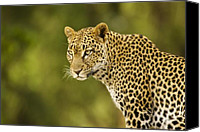 Cats Canvas Prints - Lovely Leopard Canvas Print by Michele Burgess