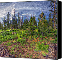 Cedar Canvas Prints - Morning Pines Canvas Print by Stephen Campbell