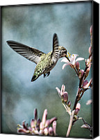 Annas Hummingbird Canvas Prints - Morning Surprises Canvas Print by Saija  Lehtonen