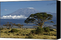 Tree Photo Canvas Prints - Mount Kilimanjaro Canvas Print by Michele Burgess