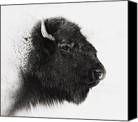 Buffalo Canvas Prints - Once We Were Many Canvas Print by Ron  McGinnis