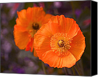 Photographic Art Print Canvas Prints - Orange Poppies Canvas Print by Rona Black