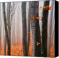 Fall Leaves Canvas Prints - Orange Wood Canvas Print by Evgeni Dinev