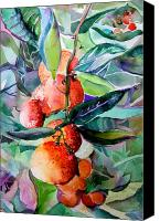 Fruits Drawings Canvas Prints - Oranges Canvas Print by Mindy Newman