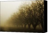 Creepy Canvas Prints - Orchard in Fog Canvas Print by Rebecca Cozart
