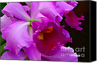 Cattleya Canvas Prints - Orchid 5 Canvas Print by Julie Palencia