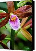 Potography Canvas Prints - Orchid Canvas Print by Christopher Holmes