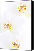 White Photo Special Promotions - Orchid Canvas Print by Don Hooper