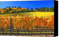 Sunny Vineyard Photo Canvas Prints - Oregon Wine Country Canvas Print by Margaret Hood