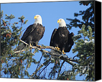 Eagle Watching Canvas Prints - Paired Eagles Canvas Print by Brent Easley