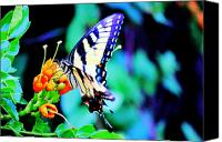 Photography Drawings Canvas Prints - Pale Swallowtail Butterfly Canvas Print by Barry Jones