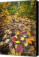 Fall Leaves Canvas Prints - Path in fall forest Canvas Print by Elena Elisseeva