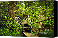 Pacific Canvas Prints - Path in temperate rainforest Canvas Print by Elena Elisseeva