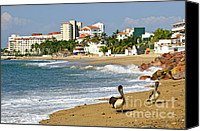 Pacific Canvas Prints - Pelicans on beach in Mexico Canvas Print by Elena Elisseeva