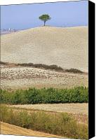Tuscany Canvas Prints - Pine Tree Canvas Print by Joana Kruse