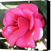 Camelia Canvas Prints - Pink Camelia Canvas Print by Therese Alcorn