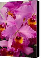 Cattleya Canvas Prints - Pink Cattleya Orchids Canvas Print by Allan Seiden - Printscapes