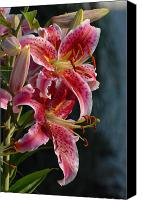 Framed Pink Lily Canvas Prints - Pink Lilies 1 Canvas Print by Joyce StJames