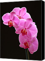 Close Up Canvas Prints - Pink Orchids Canvas Print by Juergen Roth