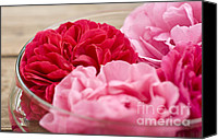 Pinkish Canvas Prints - Pink Roses Canvas Print by Frank Tschakert
