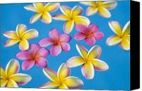 Water Art Canvas Prints - Plumerias Floating Canvas Print by Ron Dahlquist - Printscapes