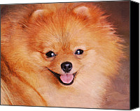 Dog Photo Canvas Prints - Pomeranian Portrait Canvas Print by Jai Johnson