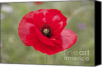 Poppy Petals Canvas Prints - Poppy Canvas Print by Sophie De Roumanie