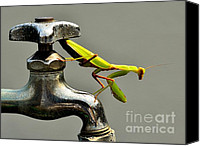 Predatory Canvas Prints - Praying Mantis Canvas Print by Dean Harte