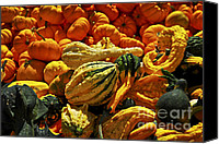 Decoration Photo Canvas Prints - Pumpkins and gourds Canvas Print by Elena Elisseeva