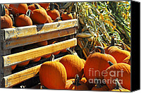 Vegetables Canvas Prints - Pumpkins Canvas Print by Elena Elisseeva
