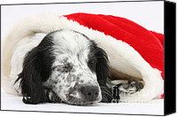 Father Christmas Canvas Prints - Puppy Sleeping In Christmas Hat Canvas Print by Mark Taylor