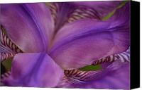 Jd Grimes Canvas Prints - Purple Beauty Canvas Print by JD Grimes
