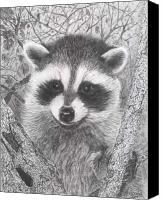 Raccoon Drawings Canvas Prints - Raccoon Kit Canvas Print by Marlene Piccolin