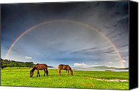 Bulgaria Canvas Prints - Rainbow Horses Canvas Print by Evgeni Dinev